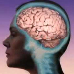 Human_brain_female_side_view